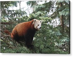 All Alone Acrylic Print by Judy Whitton