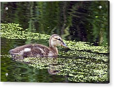 All Alone Acrylic Print by Sharon Talson