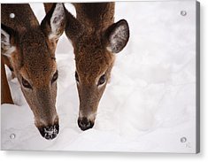 All Eyes On Me Acrylic Print by Karol Livote