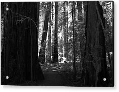 All Is Quiet Acrylic Print