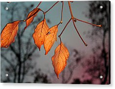 All That's Left Acrylic Print