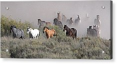 All The Pretty Horses Acrylic Print by Elizabeth Eldridge