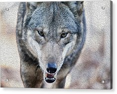 All Wolf Acrylic Print by Karol Livote