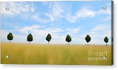Allee  03 Acrylic Print by Hannes Cmarits