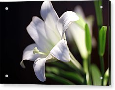 Acrylic Print featuring the photograph Allelujah by Cathy Donohoue