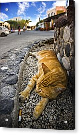 Acrylic Print featuring the photograph Alley Cat Siesta by Meirion Matthias