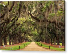 Alley Of The Oaks Acrylic Print