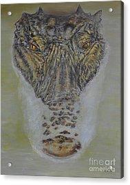 Alligator Alert Acrylic Print