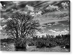 Acrylic Print featuring the photograph Alligator Country by Geraldine Alexander