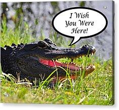 Alligator Greeting Card Acrylic Print by Al Powell Photography USA