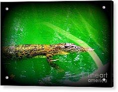 Alligator In Australia Acrylic Print by John Potts