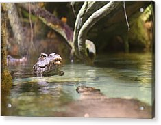 Alligator - National Aquarium In Baltimore Md - 12121 Acrylic Print by DC Photographer