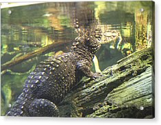Alligator - National Aquarium In Baltimore Md - 12123 Acrylic Print by DC Photographer