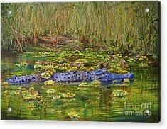 Alligator Pod Acrylic Print