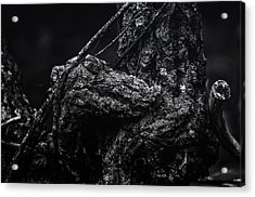 Alligator Tree Acrylic Print