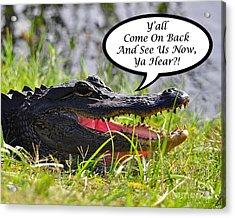 Alligator Yall Come Back Card Acrylic Print by Al Powell Photography USA