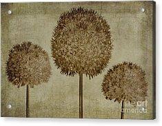 Allium Hollandicum Sepia Textures Acrylic Print by John Edwards