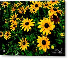 Sunflower Allure Acrylic Print
