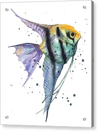 Alluring Angelfish Acrylic Print by Alison Fennell