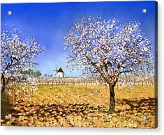 Almendros Acrylic Print by Margaret Merry