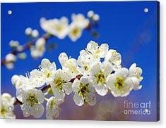 Almond Blossom Acrylic Print by Carlos Caetano