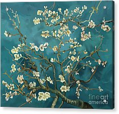 Acrylic Print featuring the painting Almond Blossoms' Reproduction by Tim Gilliland