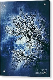 Almond Tree #2 Acrylic Print by Angela Bruno
