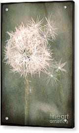 Acrylic Print featuring the photograph Almost Gone ... by Chris Armytage