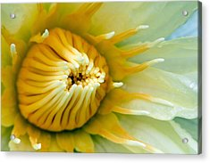 Almost Acrylic Print by Karen Walzer