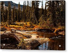 Almost Perfect Acrylic Print by Randolph Fritz