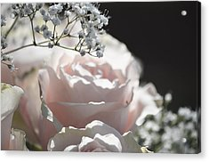Almost White Roses Acrylic Print