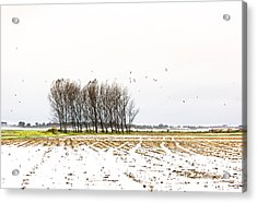 Almost Winter Acrylic Print