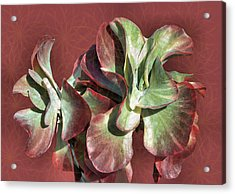 Aloe Design Acrylic Print by Rosalie Scanlon