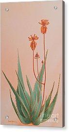 Aloe Family Acrylic Print