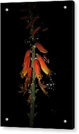 Acrylic Print featuring the photograph Aloe Flower by Leticia Latocki