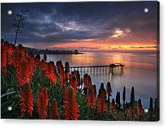 Aloes Last Light Acrylic Print