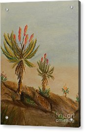Aloes Acrylic Print