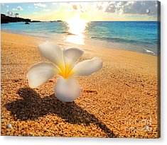 Aloha Paradise Acrylic Print