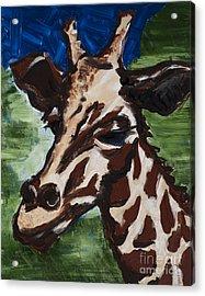 Aloha Zoo Acrylic Print