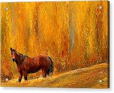 Alone In Grandeur- Bay Horse Paintings Acrylic Print