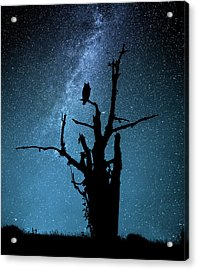 Alone In The Dark Acrylic Print by Manu Allicot