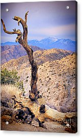 Alone In The Desert Acrylic Print by Mariola Bitner