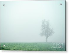 Alone In The Fog - Green Acrylic Print by Hannes Cmarits