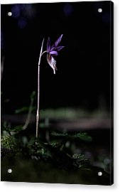 Acrylic Print featuring the photograph Alone In The Forest by Betty Depee