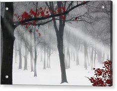 Alone In The Forest Acrylic Print by Tom York Images