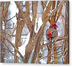 Alone In The Snow Storm Acrylic Print