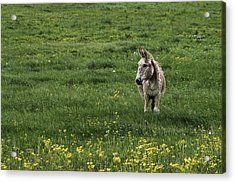 Alone Acrylic Print by Kimberly Danner