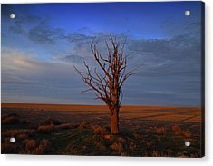 Acrylic Print featuring the photograph Alone Yet Not Alone by Lynn Hopwood