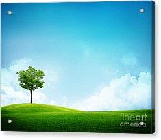 Alone Tree Acrylic Print by Boon Mee