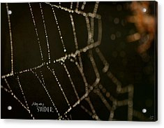 Along Came A Spider Acrylic Print by Lisa Knechtel
